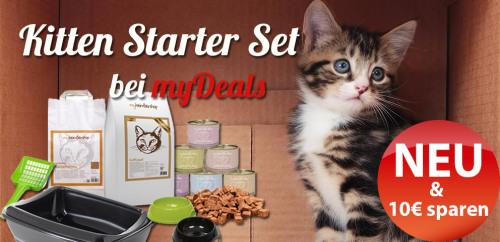 kitten-staret-set